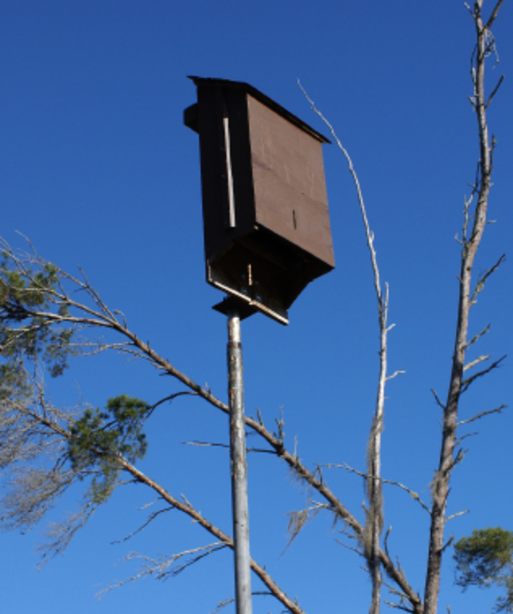 Bat Houses - Build a Bat House for Your Back Yard