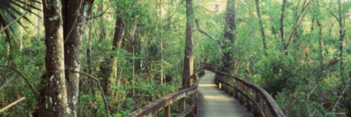 Boardwalk at Big Cypress Bend, Fakahatchee Strand State Preserve, Florida
