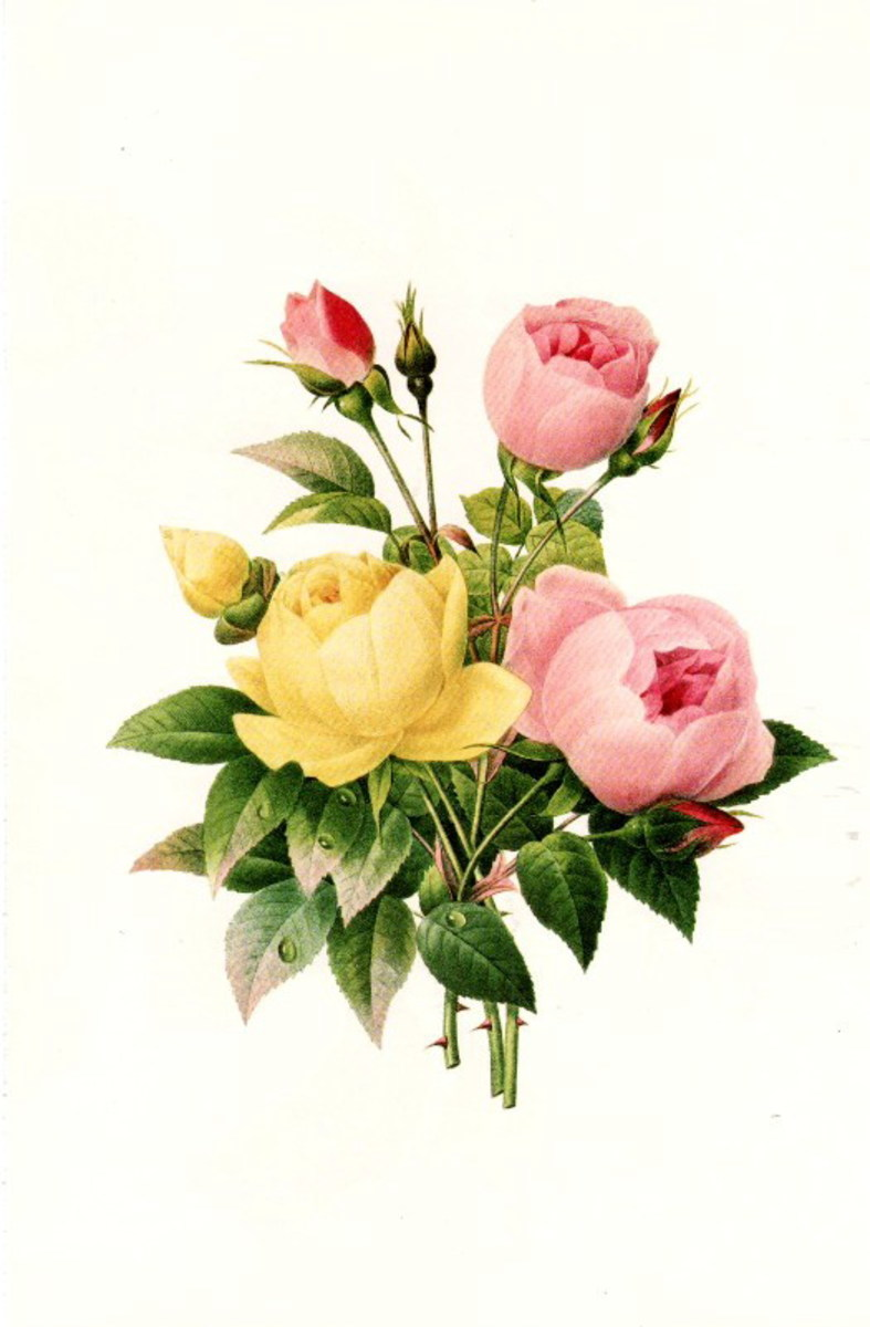 Vintage yellow and pink roses clip art