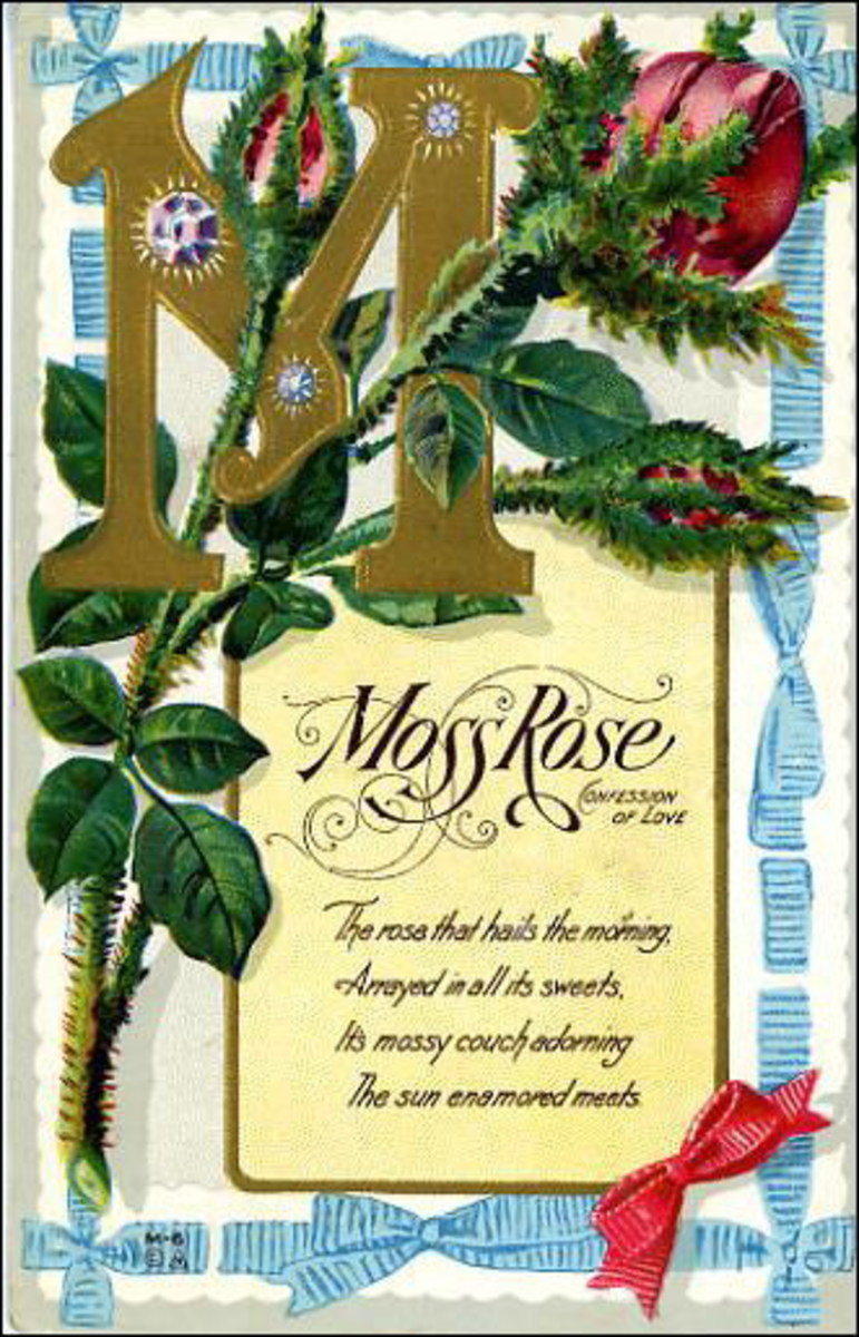 Moss rose vintage flower card
