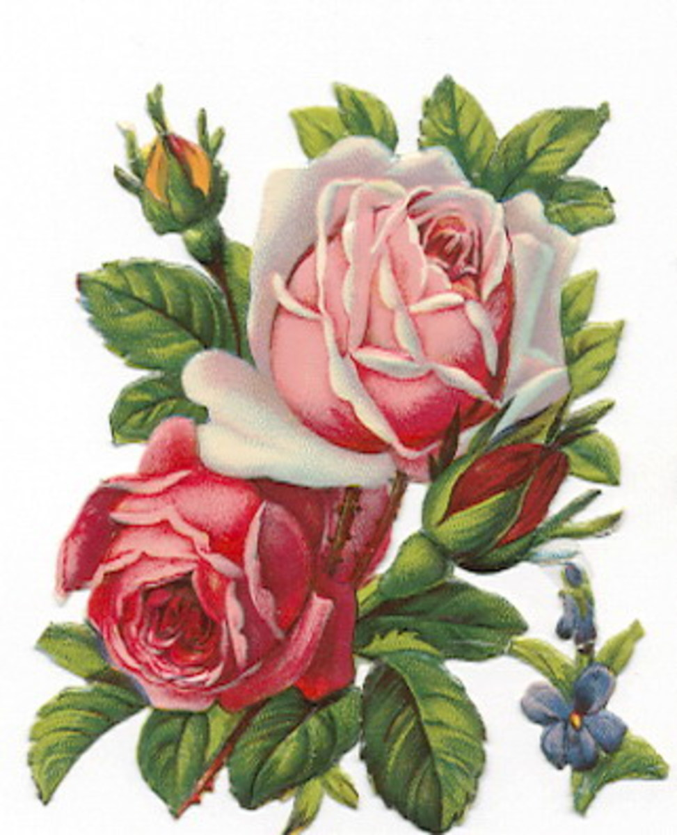Red and pink vintage roses