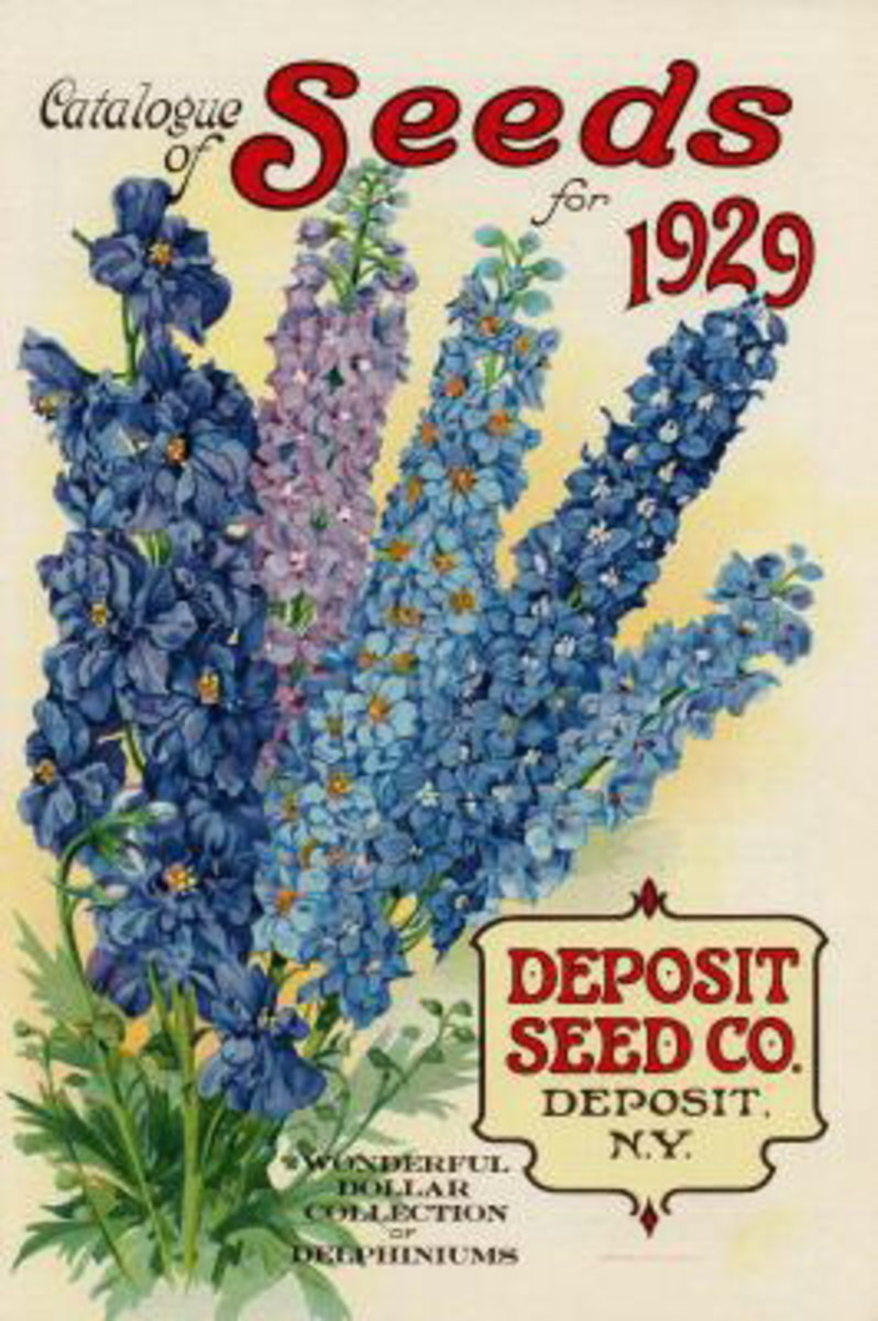 Deposit Seed Co. vintage seed packet image -- 1929