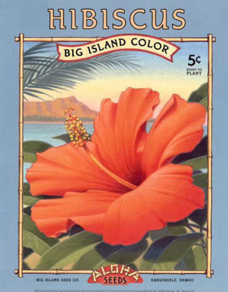 Aloha Seeds vintage seed packet image