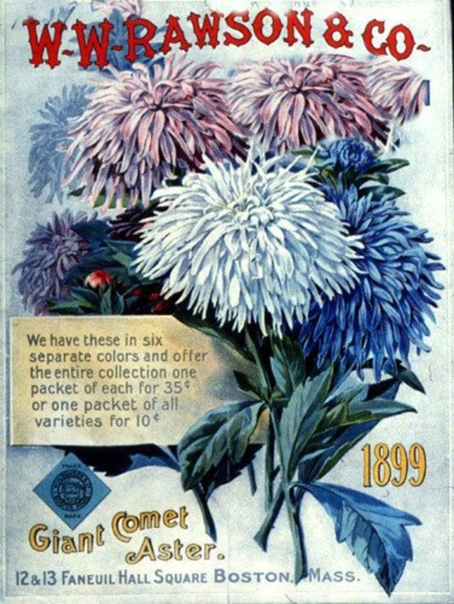 W.W. Rawson & Co. antique seed packet artwork -- 1899