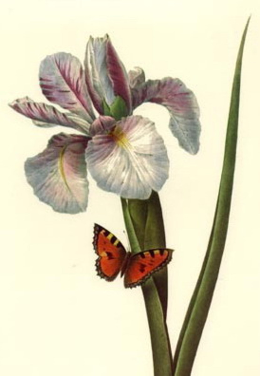 Orchid and butterfly clip art
