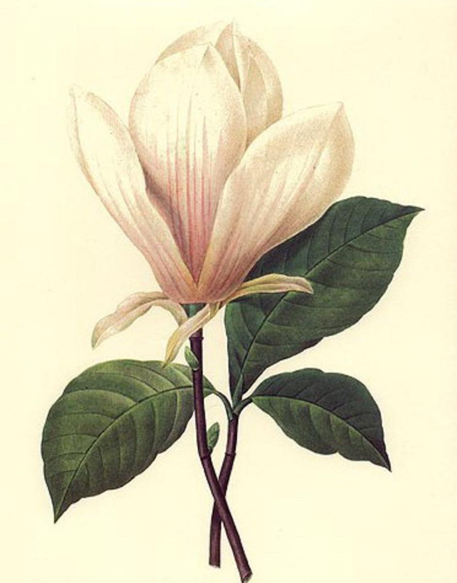 White flower image