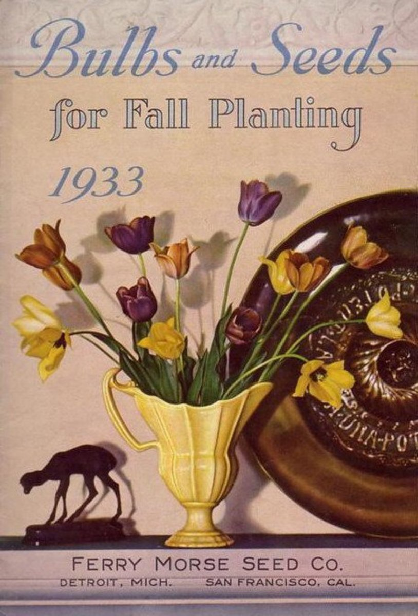 Ferry-Morse Seed Co. vintage seed packet clipart -- 1933