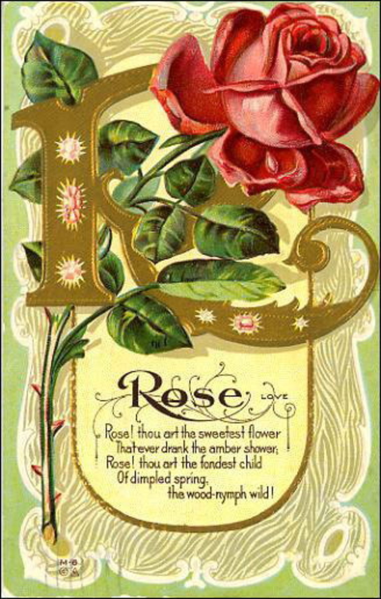 Rose vintage flower card