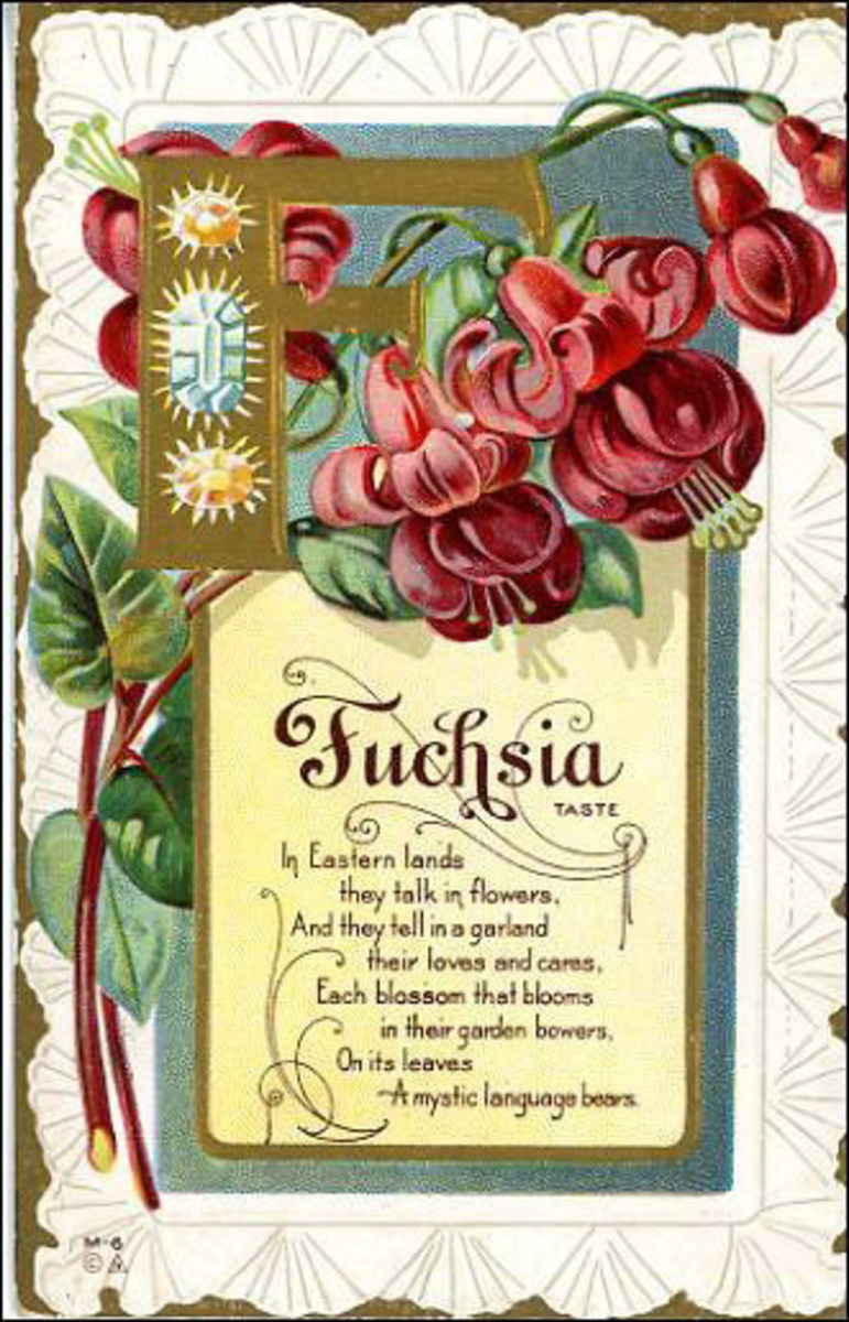 Fuschia vintage flower card