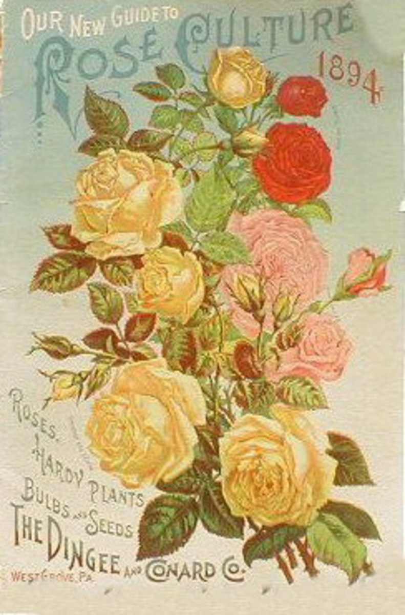 "The Dingee & Conard Co. ""Our New Guide to Rose Culture"" cover -- 1894"
