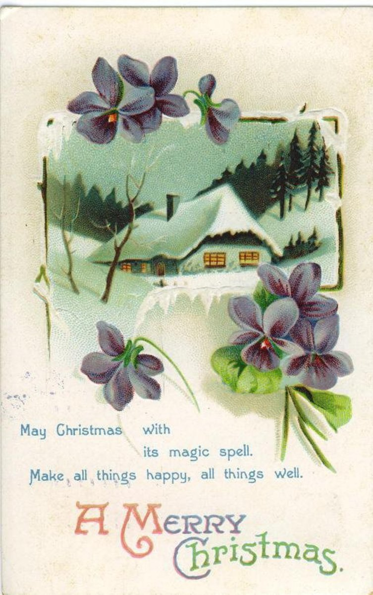 Violets with snow scene