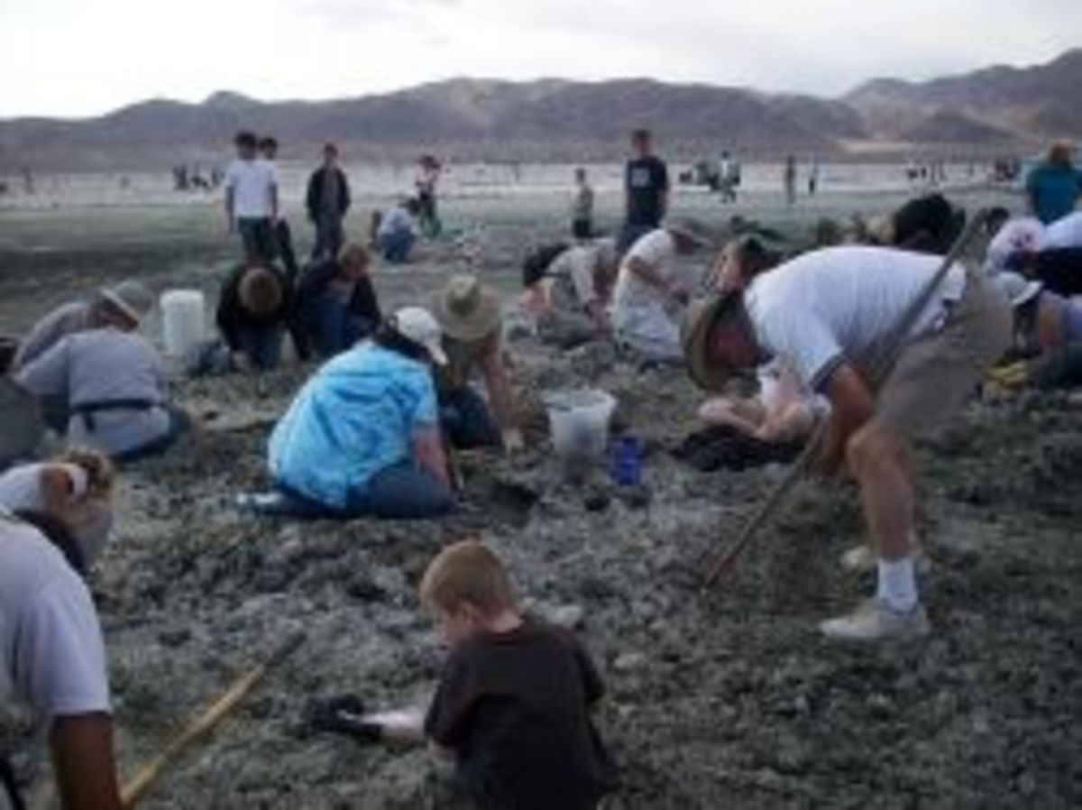 Collecting Minerals near Death Valley California