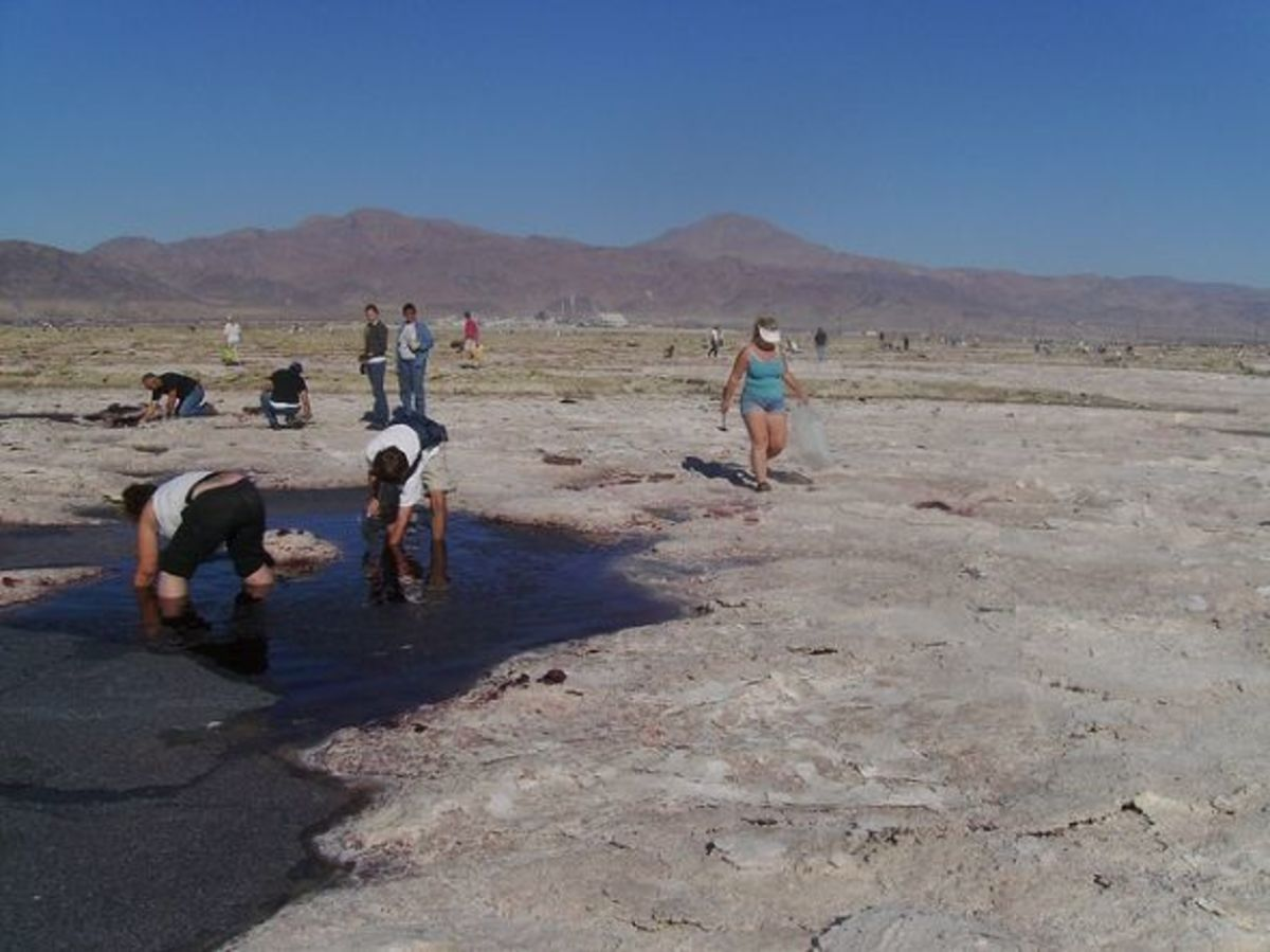Collecting Rocks and Minerals Near Death Valley