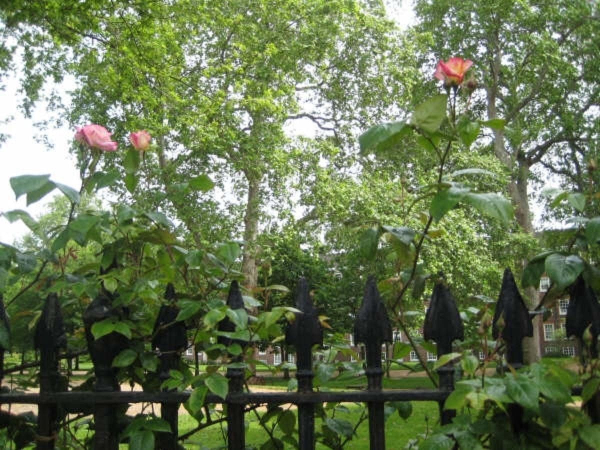 Gray's Inn Gardens, London (c) LondonGirl
