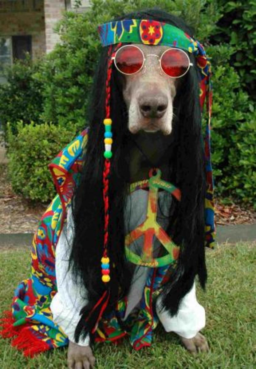 Hippie Hound Dog. Cha Cha Cha! Peace out, Dog!