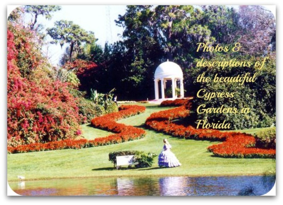 Pictures of the beautiful Cypress Gardens in Florida