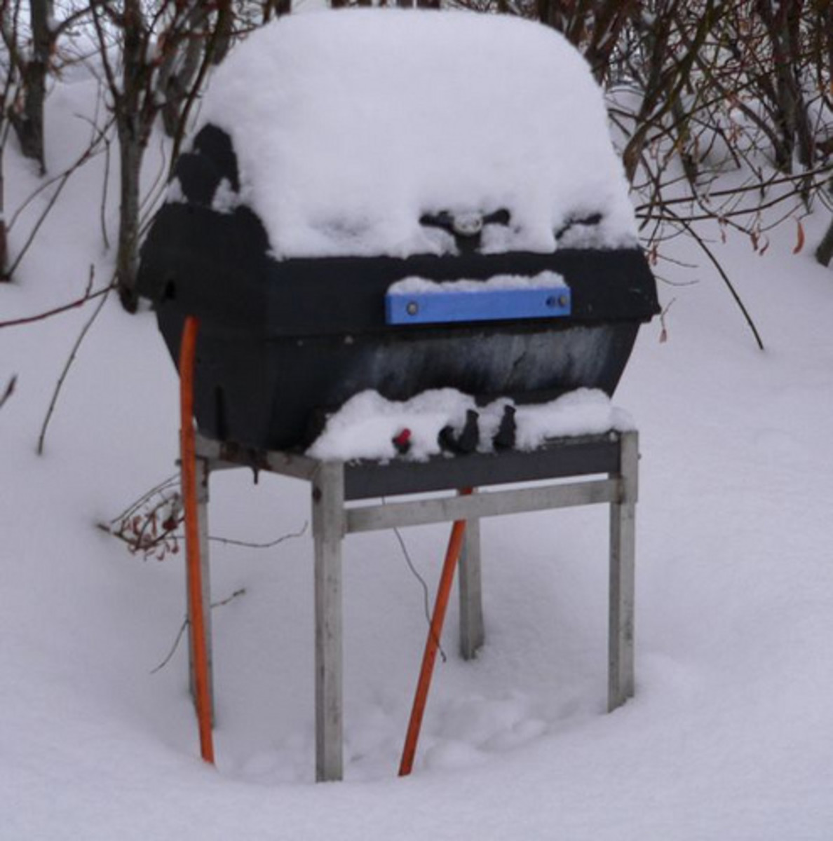 Grill Out in the Cold (Photo courtesy by pegwinn from Flickr.com)