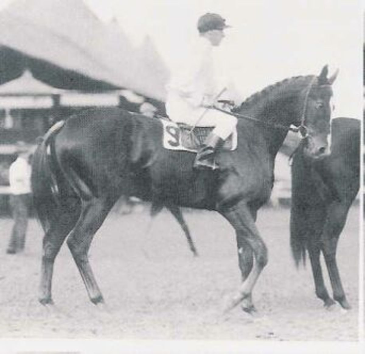 Regret, 1915 Kentucky Derby winner