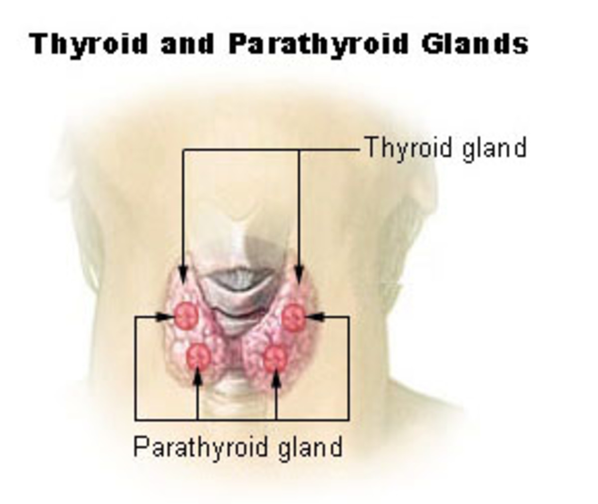 hyperthyroidism-hypothyroidism-succesful-alternative-healing