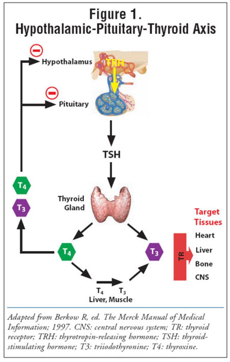 Most active thyroid hormone