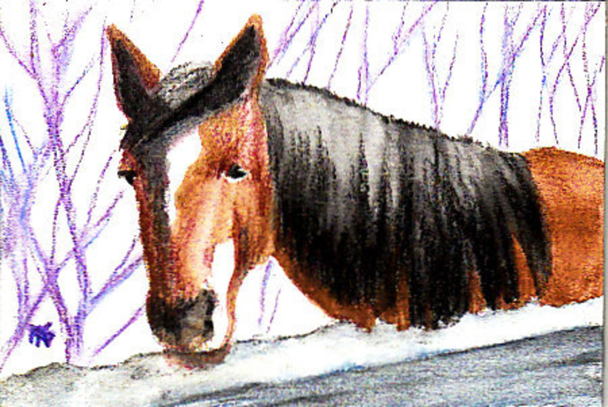 "Horse in Winter  4"" x 6""  Derwent Aquatone on Canson Montval 140lb cold press watercolor block.  Robert A. Sloan"