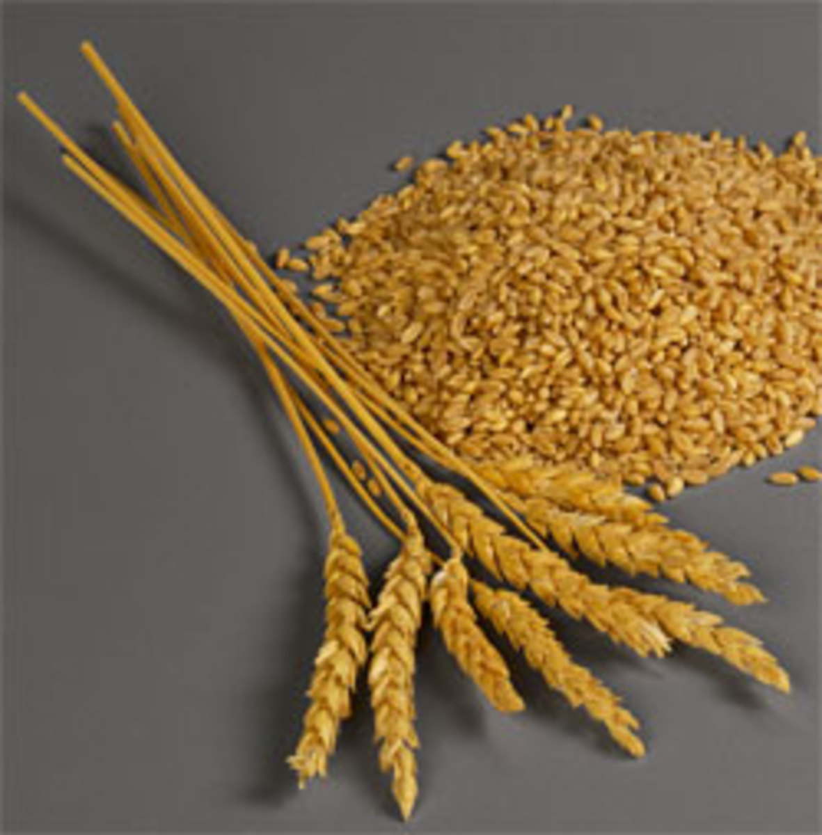 Healthy wheat and its seeds