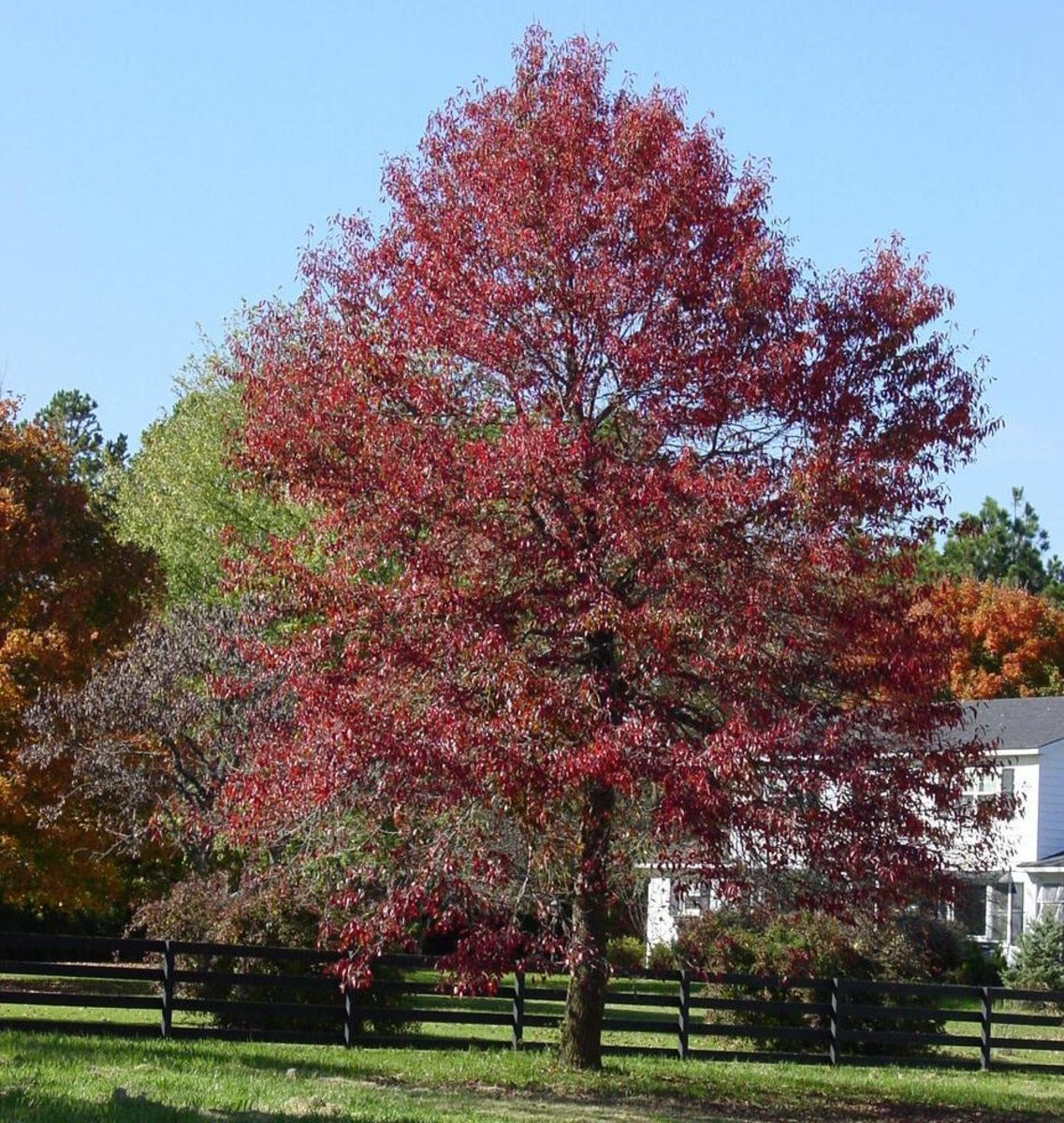 How to be Successful with Your Ornamental Tree Landscaping Strategy