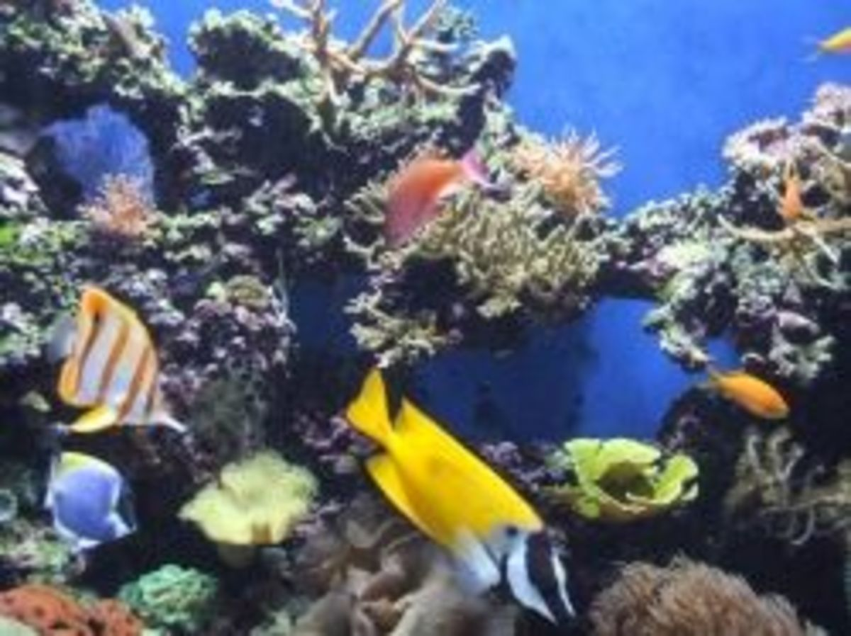 Marine Salt Water Reef
