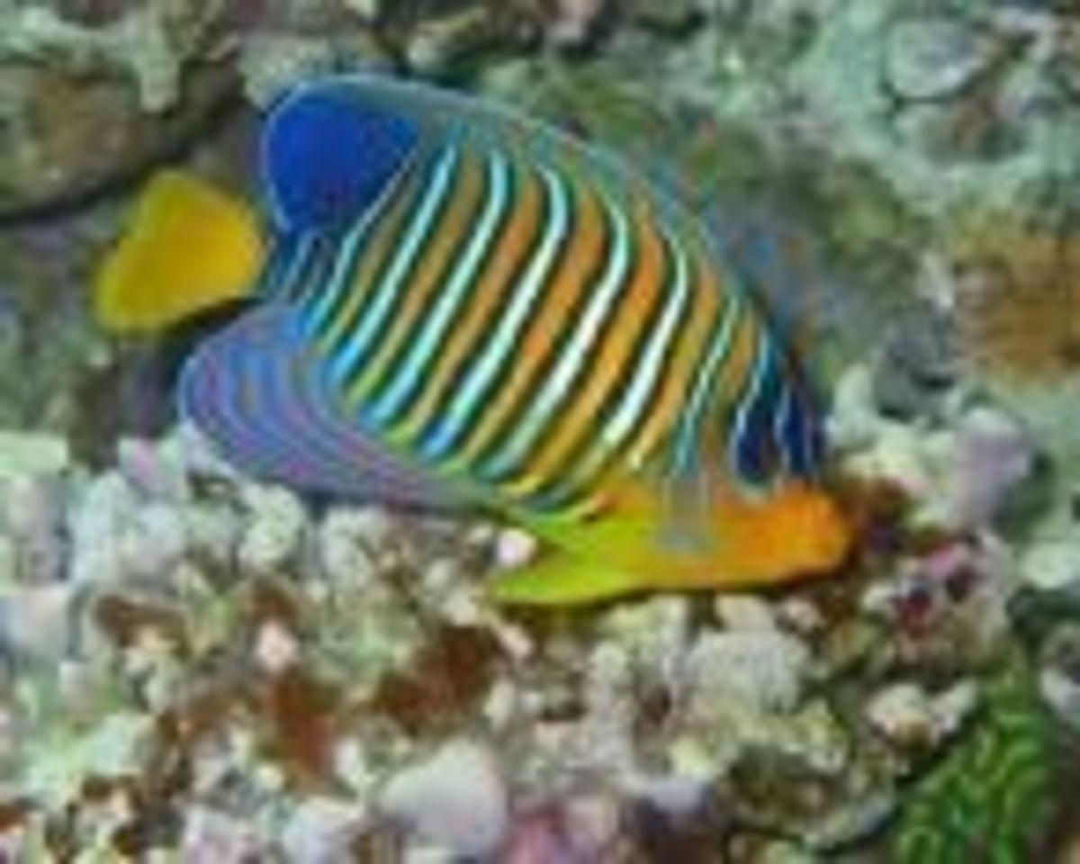 fish4pets
