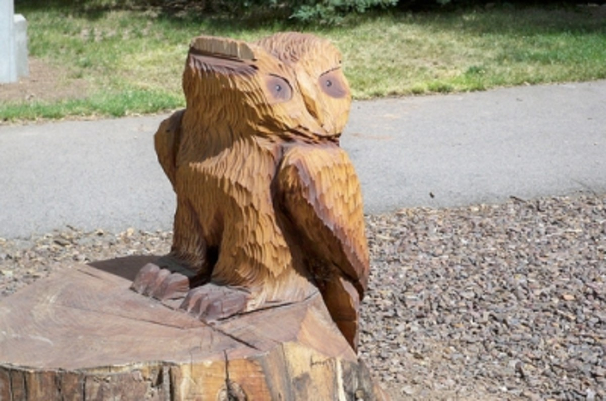 A tree stump someone fashioned into an owl (sadly destroyed by vandals during Spring Break, 2012)