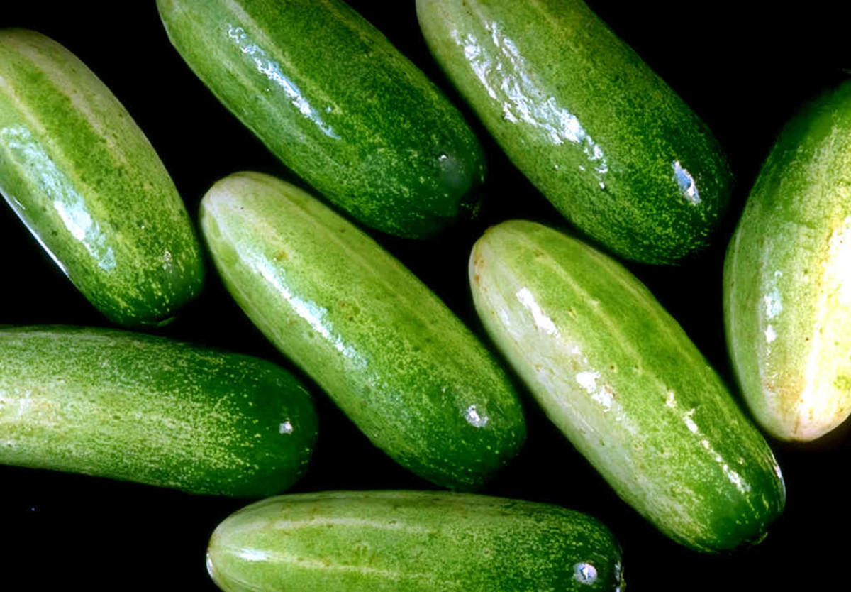 a-brief-history-of-some-of-our-favorite-garden-vegetables