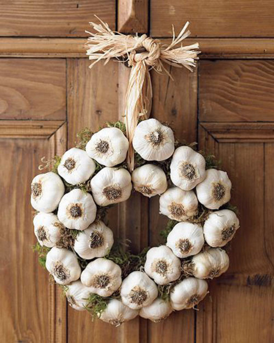 In some parts of the world garlic is hung on doors or above doors for protection. Some people think it keeps away vampires and other evil things.