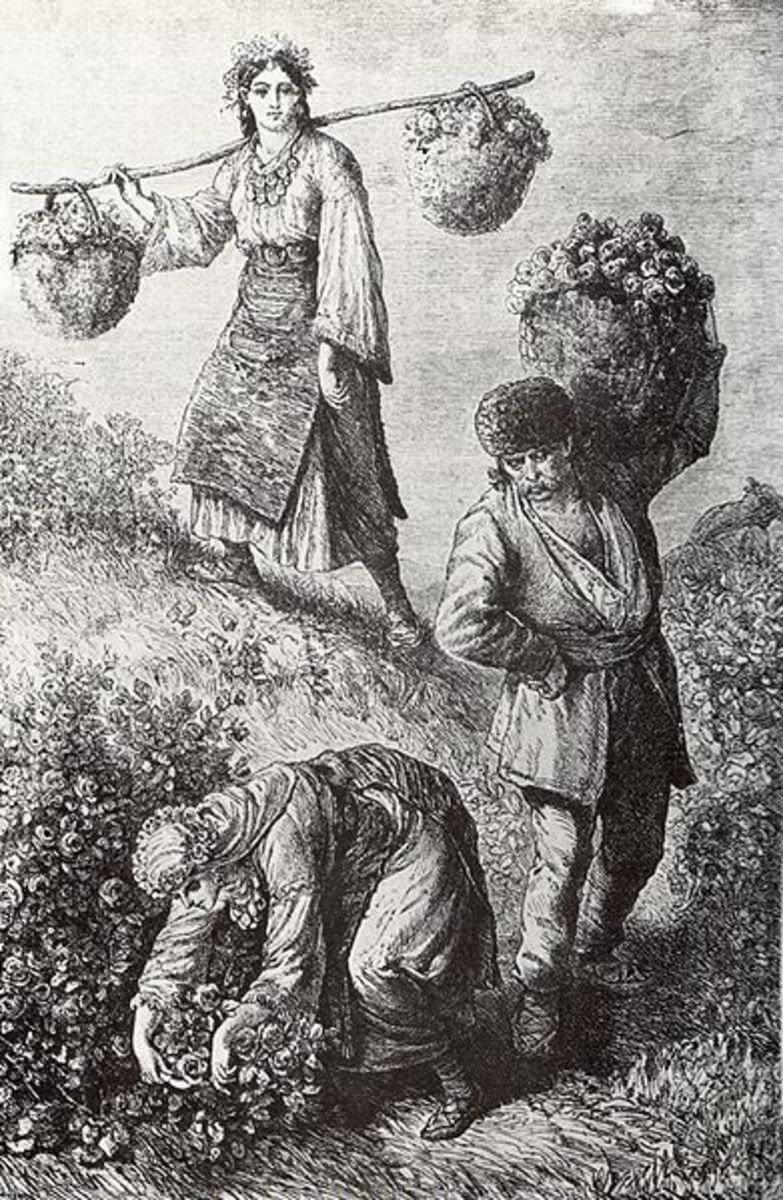 Commercial rose-picking in Bulgaria in the 1870s