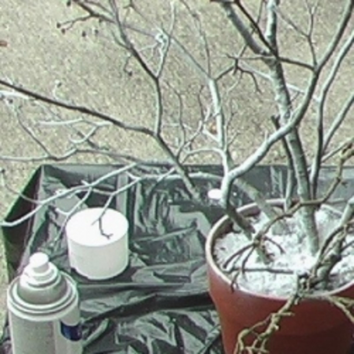 Branches from a real tree, cement mix, clay pot and white spray paint can be made into a gift money tree for any occasion.