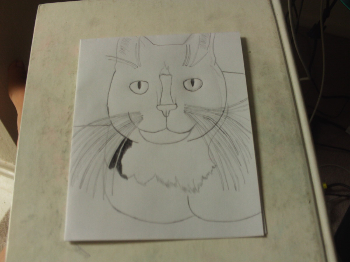 Use the black colored pencil to fill in the space around the cat's whiskers.