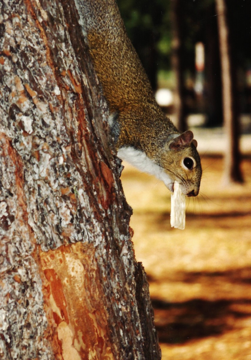 Two Funny Cute and Short Stories about Squirrels
