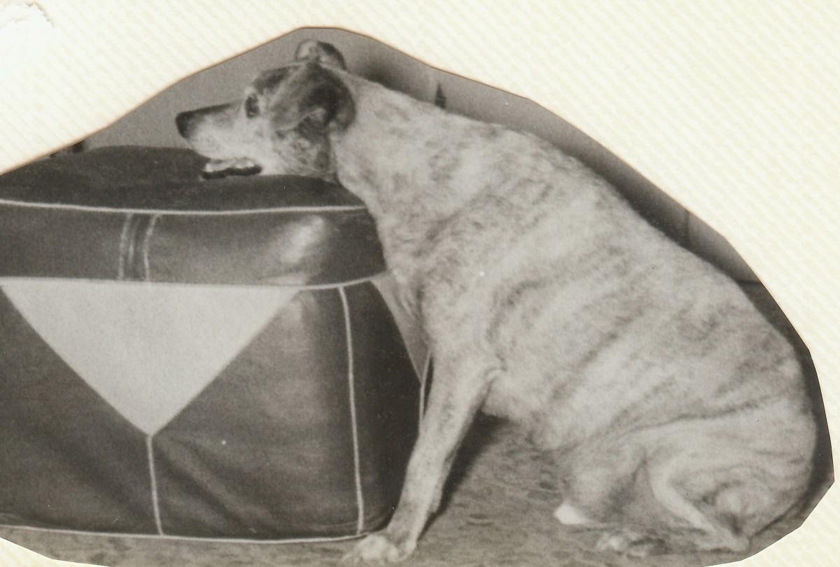 Photo of Jiggs