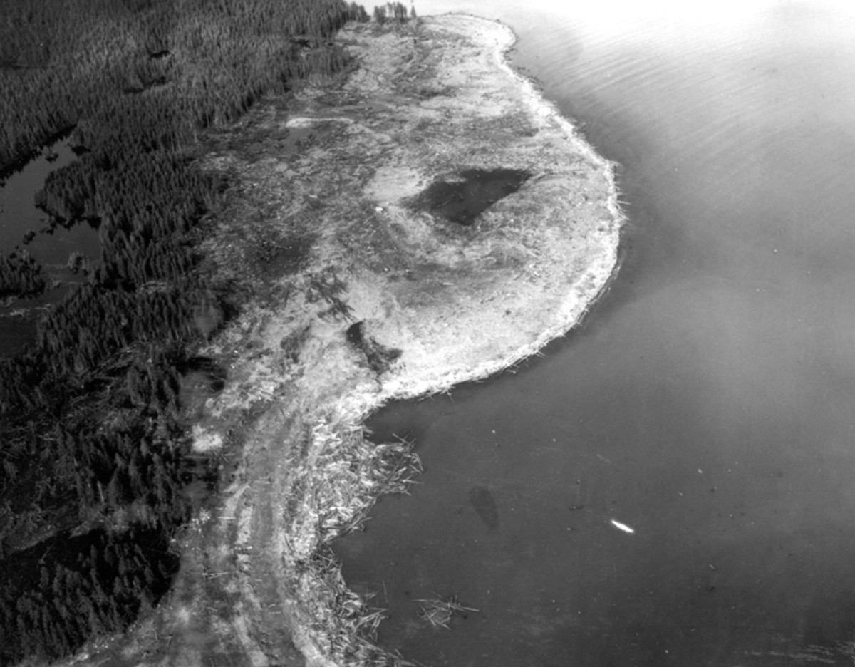 Wave damage on the south shore of Lituya Bay, from Harbor Point to the spur southwest of Crillon Inlet