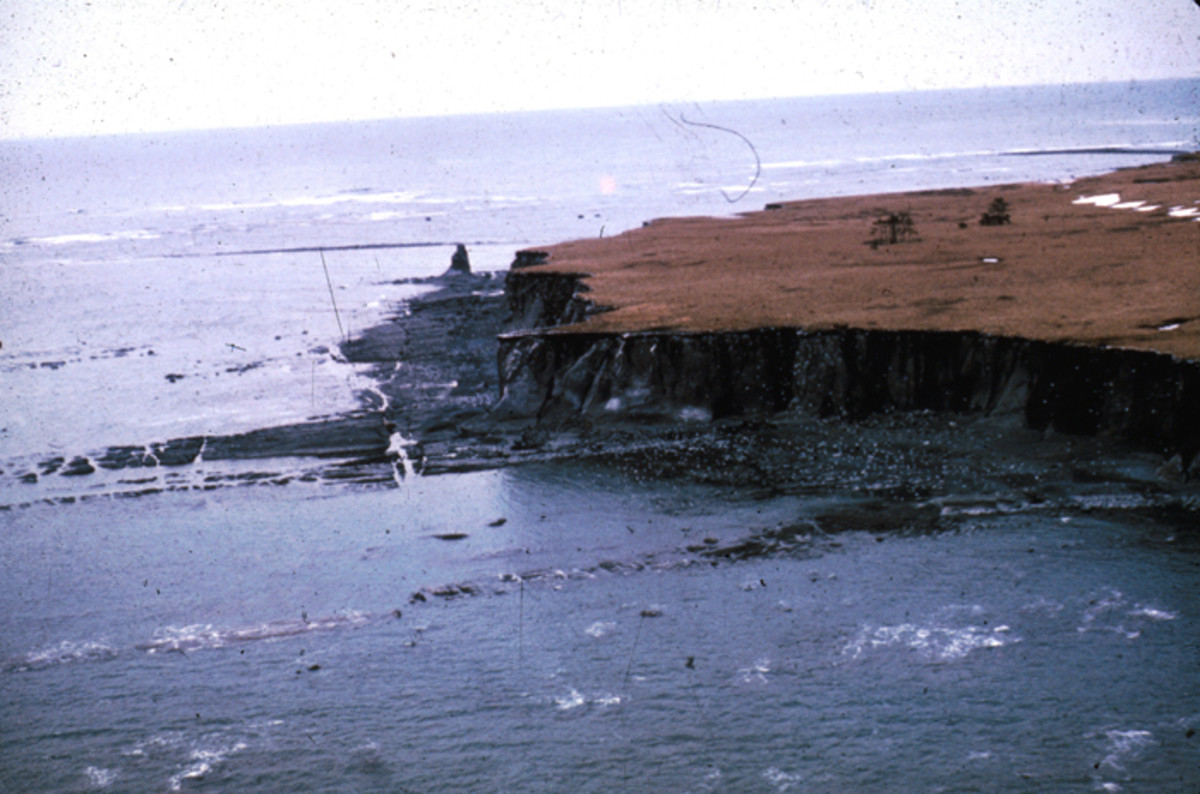 One of five uplifted terraces on the Middleton island, and a surf-cut rock platform exposed between the base of the sea cliff and the new high tide level.