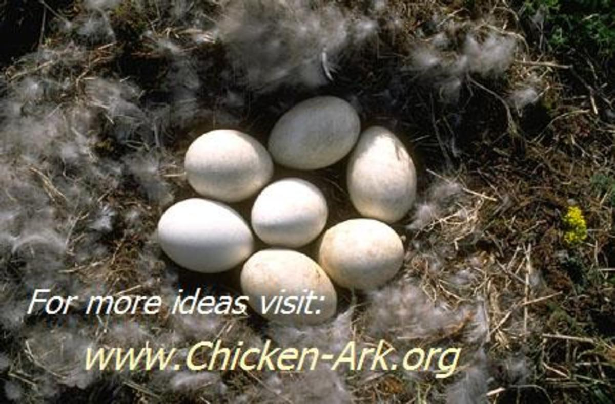 Chicken Ark Plans