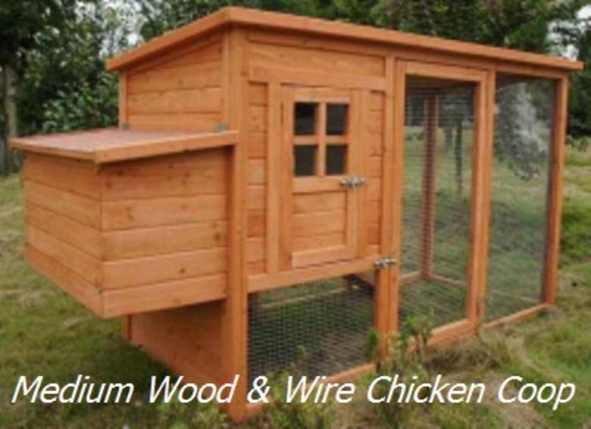 Medium Size Wood & Wire Chicken Coop
