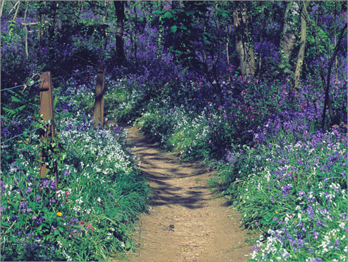 The Bluebell Woods, picture courtesy of http://www.latreladehotel.co.uk/packsb.cfm