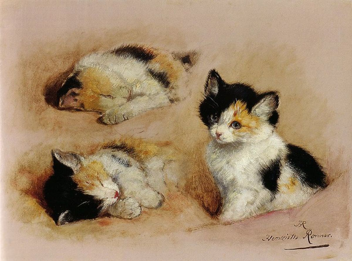 Studies of an awakening kitten by Henriette Ronner-Knip. Image courtesy of Wiki Commons