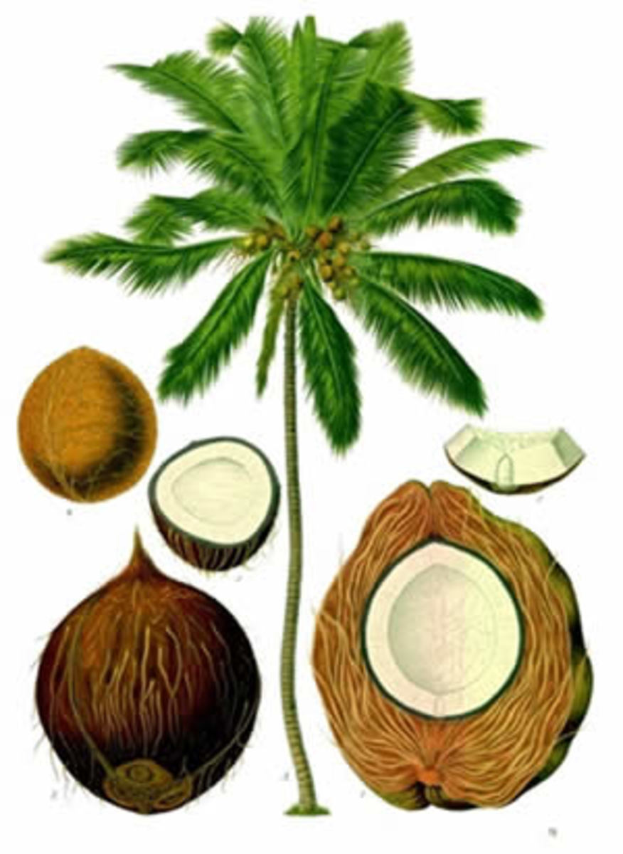 100 Uses of Coconut