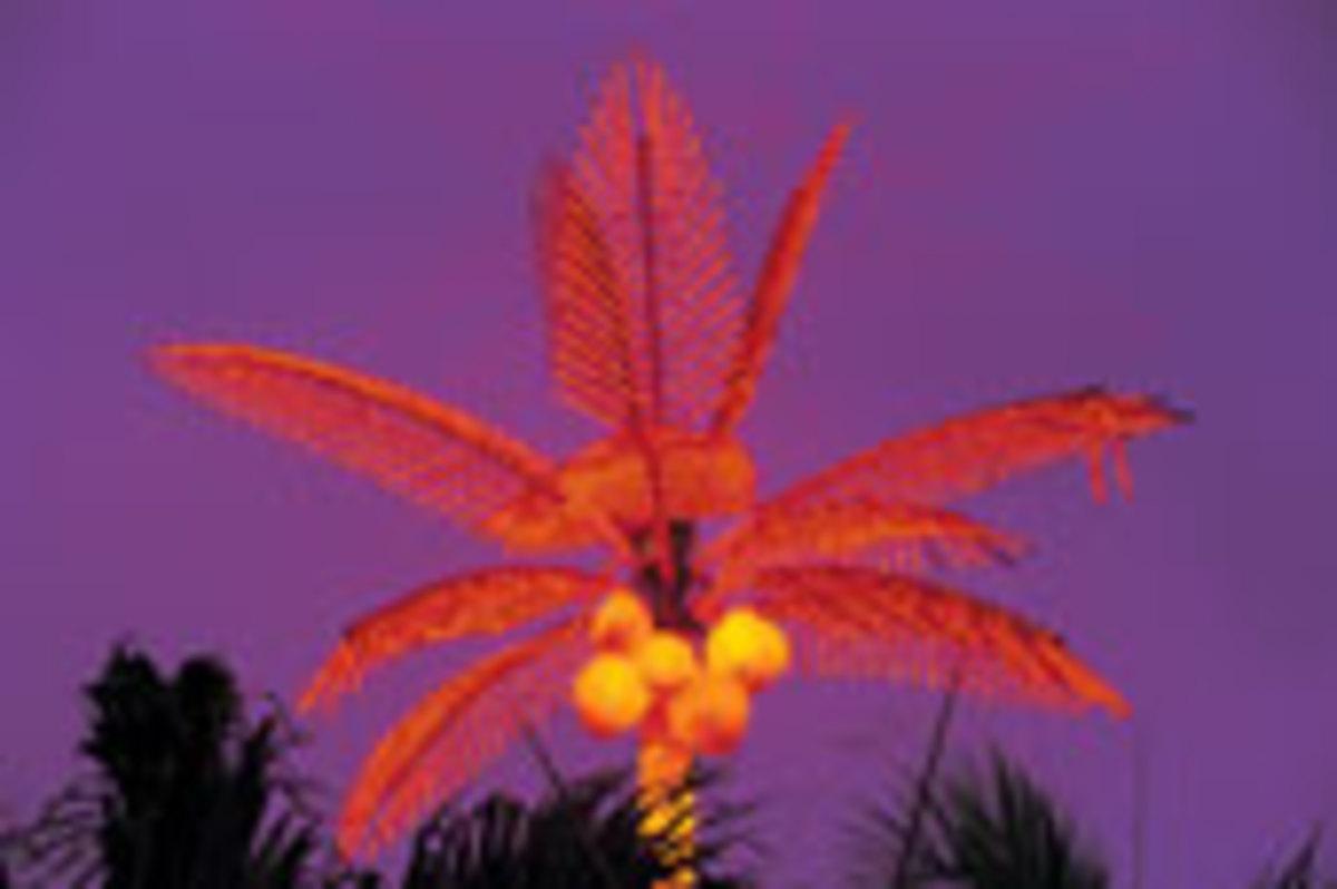 Neon-clad coconut tree (Philippines)
