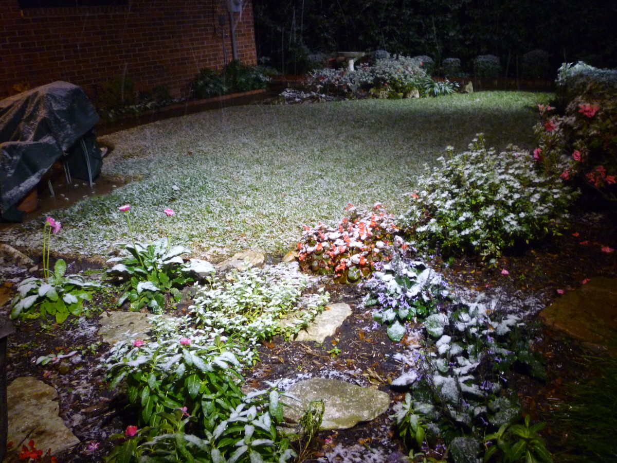 Part of our backyard & snow at around one o'clock in the morning.