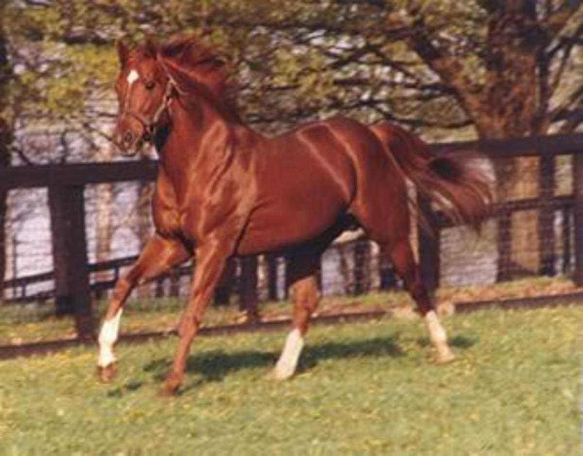 The Greatest Racehorse: Secretariat.