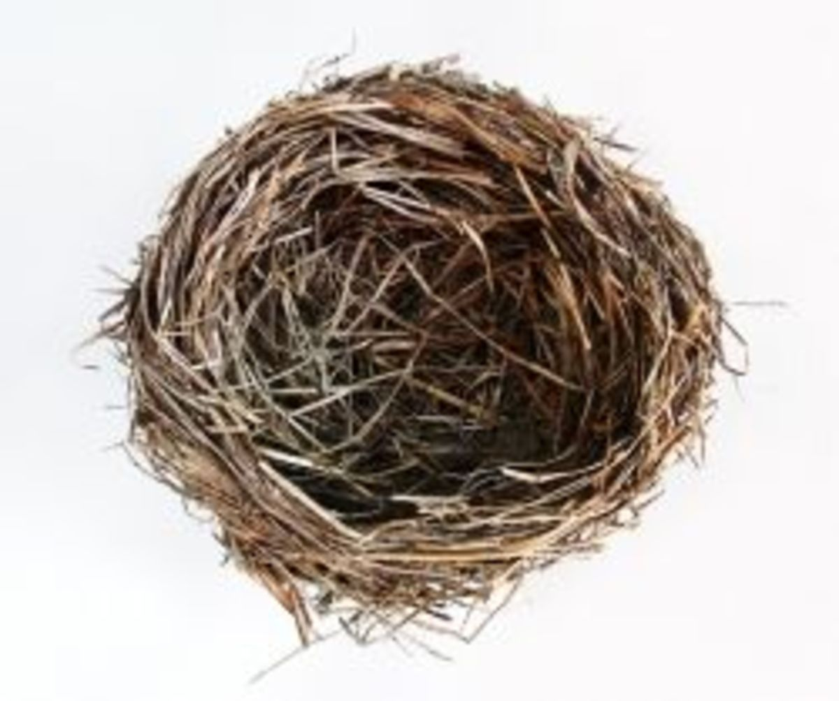 Image of an Empty Bird's Nest used with Suzanne's permission.