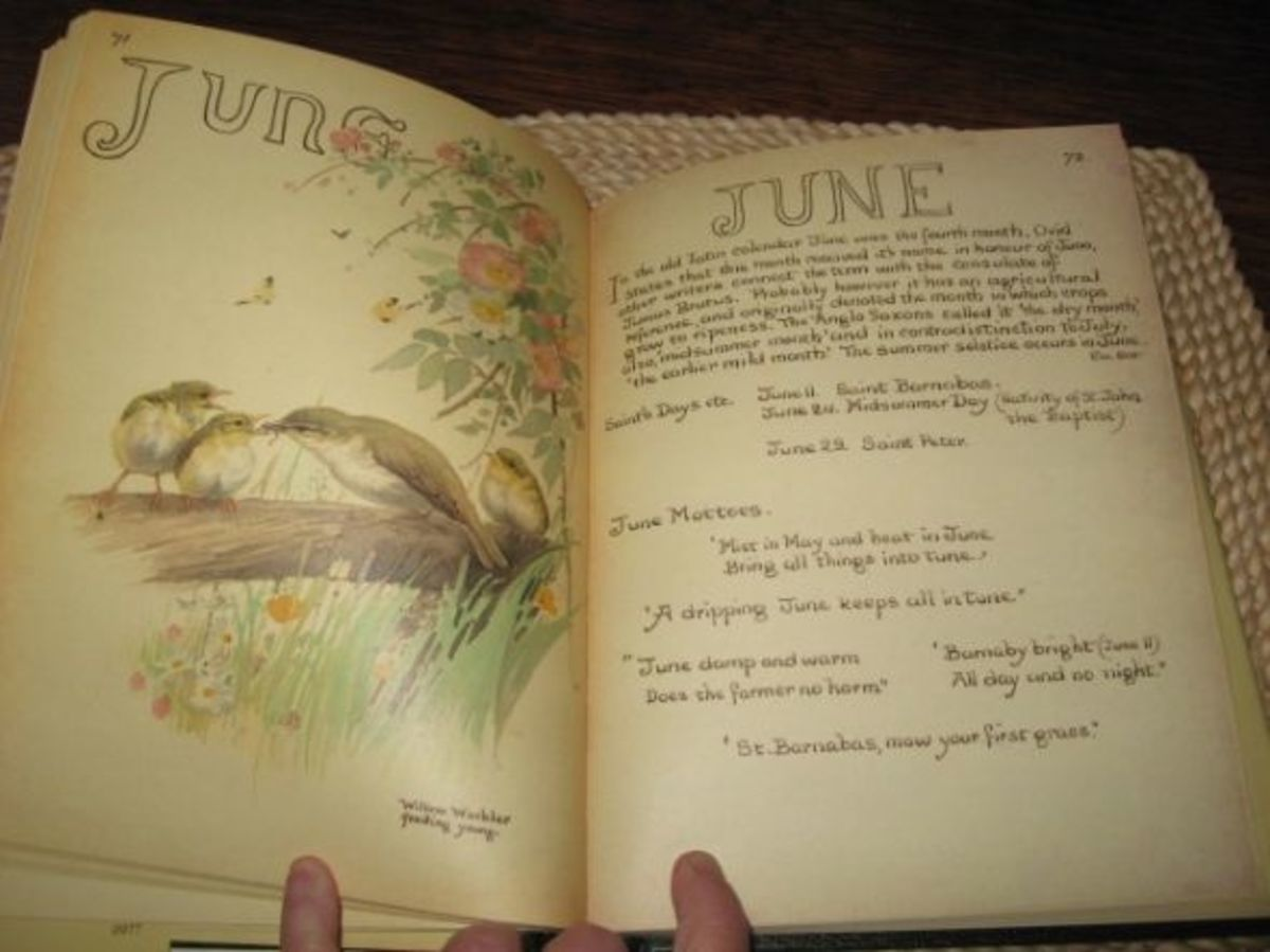 Inside book with painting and info of Willow Warbler