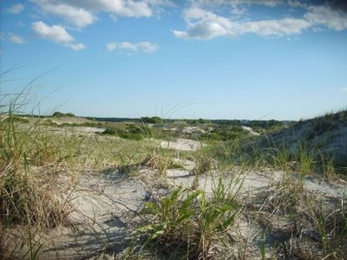 Sandy Neck Dunes, in West Barnstable